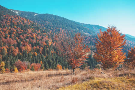 Autumn in the mountains. View of the mountains in autumn. Beautiful nature landscape. Carpathian mountains. Synevyr Pass, Zakarpattia Oblast, Ukraine