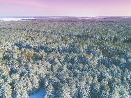 Pine snowy forest in winter. Trees covered with snow. Aerial view. Nature background