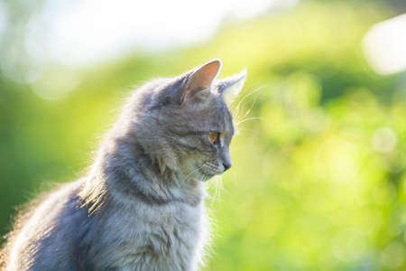 Portrait of a cute cat sitting outdoor against green natural background. Side view