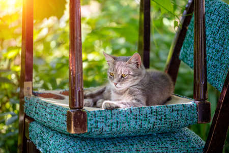The cat was lying on an upside down chair in the garden