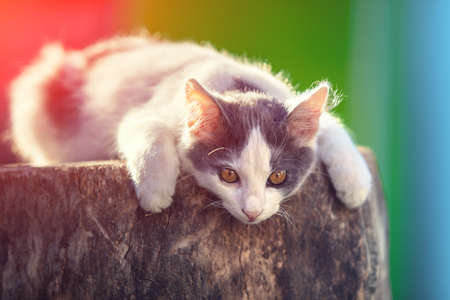 Cat sitting on a wooden stump. The сat outdoors in the countryside in summer Reklamní fotografie