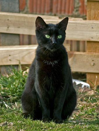 Black cat sitting outdoor Stock Photo