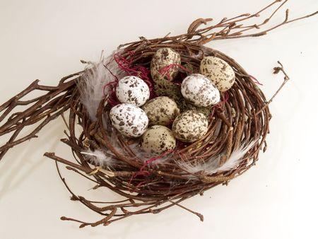 flew: Bird nest with eggs, white background Stock Photo