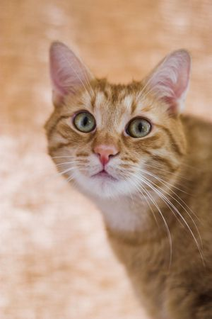 Cats life! Stock Photo