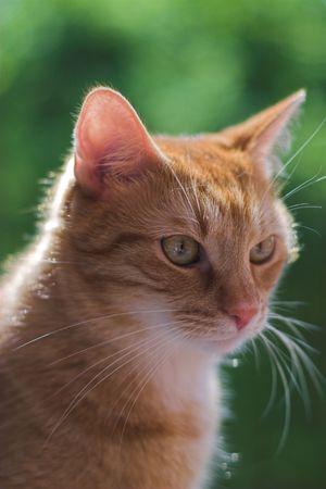 Cats life! Stock Photo - 383838