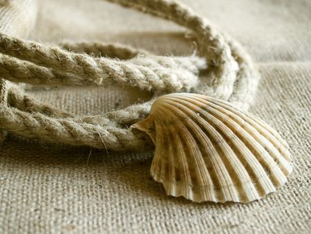 The seashell laying at the rope and jute background