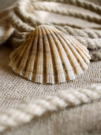 frontage: The seashell laying at rope and jute backround