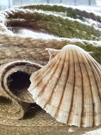 Seashell at jute, rope at background