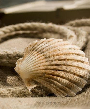 frontage: Seashell laying at the rope and jute.