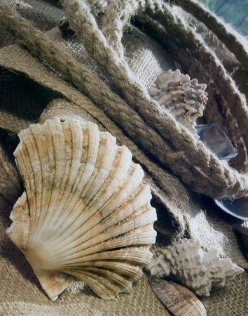 devanture: Seashalls et corde au jute.  Banque d'images