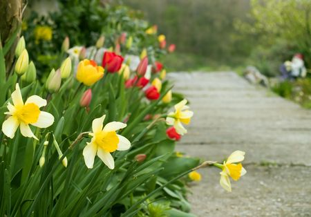 Spring garden, daffodils and tulips in front
