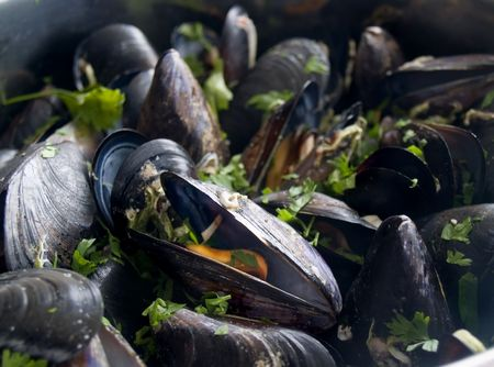 Bunch od cooked mussels , close up