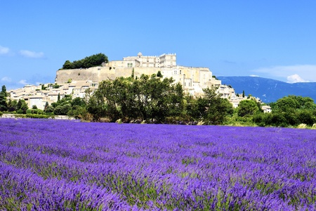 Grignan with lavender field, Departement Drome, Rhone-Alpes, France  Stock Photo