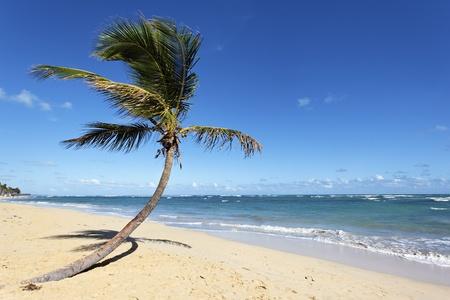 vague: coconut tree on a beach with ocean and sky