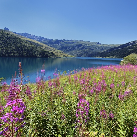 Landscape with lake and flowers in summer photo