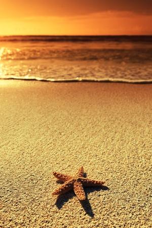 estrella de la vida: Vacaciones de verano - Estrella de mar en la puesta del sol arena de la playa