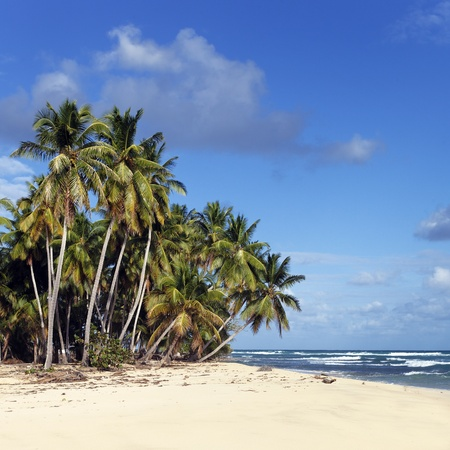 vague: caribbean beach with palm trees and blue sky