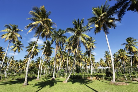 palm trees in tropical garden in summer photo