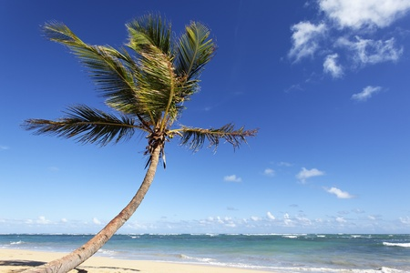 vague: beautiful palm tree on caribbean beach in summer