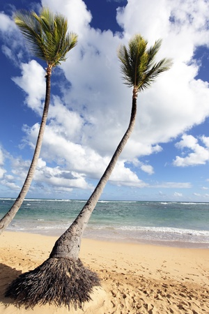 vague: caribbean beach with two palm trees under the sun