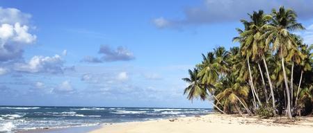 panoramic view of caribbean beach under the sun photo