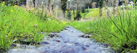 spruit: panoramic view of torrent with flowers
