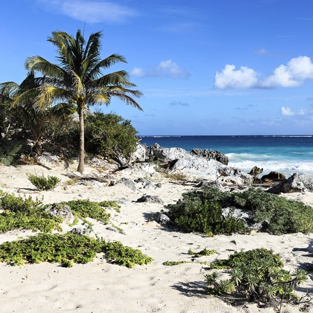 desolated: wilderness caribbean beach in summer in Mexico