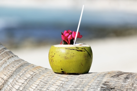 cocktail with drinking straw on palm tree on caribbean beach