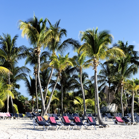 Mayan Riviera tropical beach with palm trees photo