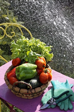 water jet: fresh vegetables on the table with water jet