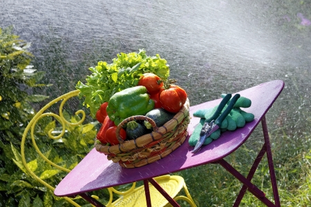 water jet: fresh vegetables on the table with water jet in garden