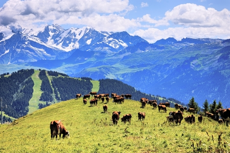 snow field: alpine landscape and cows in France in summer Stock Photo