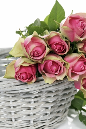 some pink roses in Basket on white background photo