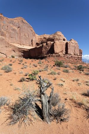 vertical view of Red rocks in Arches National park, Utah  photo