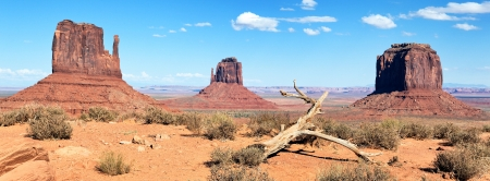 dead wood: dead wood at Monument Valley, USA, panoramic view