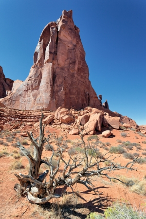 canyonland: Red rocks and dead wood in Arches National park, Utah