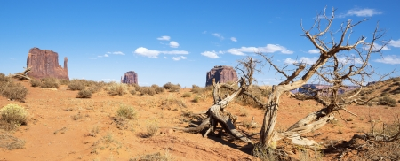 dead wood: Dead wood at Monument Valley, panoramic view, USA