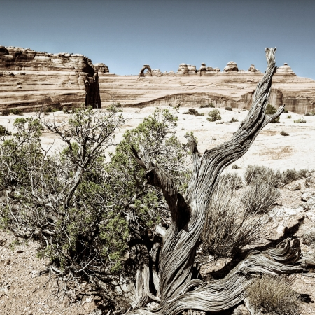 arches national park: wood and delicate arch, arizona