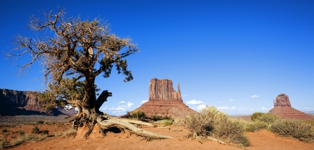 natural landmark: Panoramic view of Monument Valley and tree, USA
