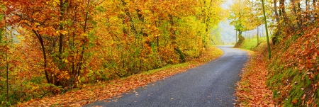 Panoramic view of road with trees on a sunny day in autumn photo