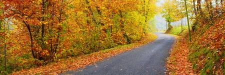 Panoramisch zicht op de weg met bomen op een zonnige dag in de herfst