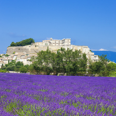 lavender field: lavender field and town of Grignan, France  Stock Photo