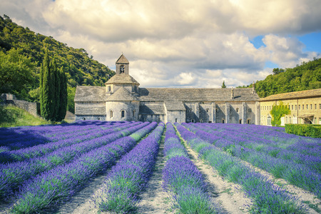 abbaye: Abbey of Senanque in morning light. Gordes, Luberon, Vaucluse, Provence, France, Europe.