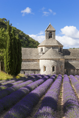senanque: Abbey of Senanque and lavender field. France.