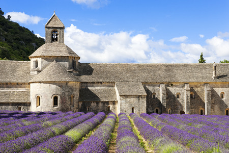 senanque: Abbey of Senanque and lavender flowers. France.