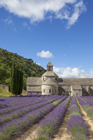 abbaye: Abbey of Senanque in summer light. Gordes, Luberon, Vaucluse, Provence, France, Europe.