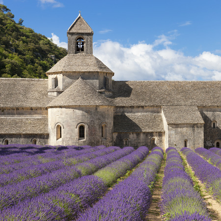 abbaye: Abbey of Senanque and lavander field. Gordes, Luberon, Vaucluse, Provence, France, Europe. Stock Photo