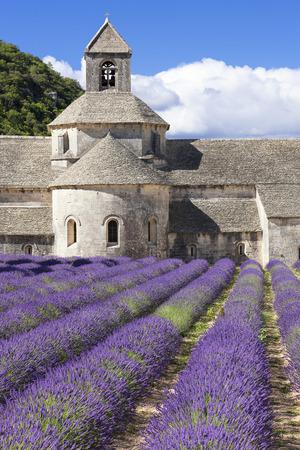 senanque: Famous Abbey of Senanque. France.