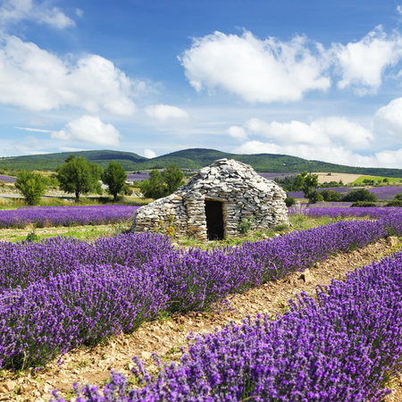 houses row: lavender field and cloudy sky, France