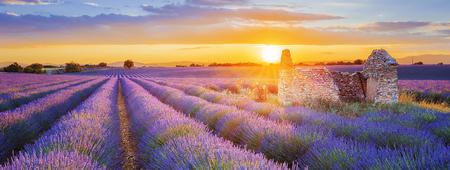 Sole sta tramontando sopra una bella lavanda viola depositata in Valensole. Provence, Francia Archivio Fotografico - 78078944